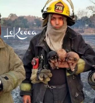 Los bomberos salvan la vida de 7 cachorritos en llamas