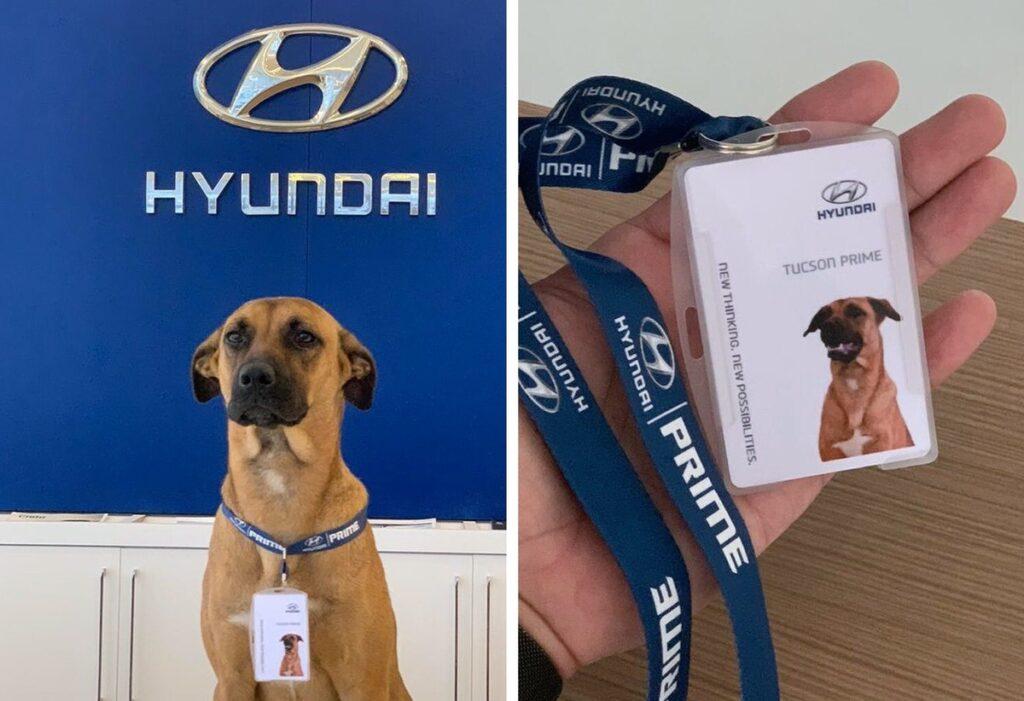 Contratan a un perro de la calle como empleado de un concesionario de autos Hyundai